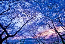 Mother Nature / by Dave Glenda Jones