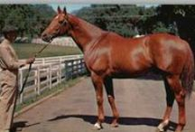 Thoroughbreds/Standardbreds Famous and not so famous / by Barbara Barham