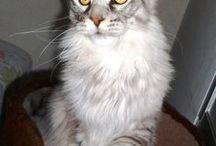 CAT / by Marleides R. V. Gerolamo