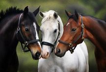 HORSES!!! / The main part of my heart❤ / by Horse Lover