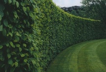 GARDENS, COURTYARDS & LANDSCAPES / by Austere Chic