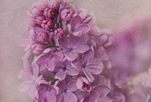 Flowers / by Ana Stanjo
