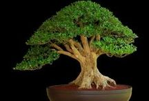 Bonsai / by Joseph