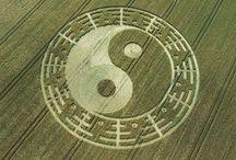 crop circles / by Carroll Wilson