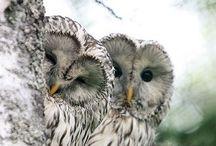 Animals ~ Owls / by Carroll Wilson