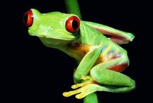 Animals ~ Frogs / by Carroll Wilson