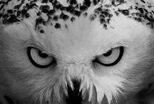 Owls / by Rachel Milliner