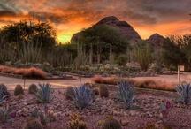 Sightseeing in Arizona / by Margarete Sanchez Ripps
