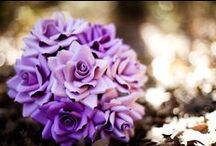 purple loves / by ivy kerr