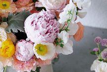 fleur / by Jenna Vela