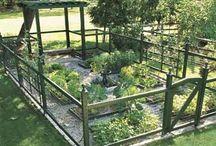 how does your garden grow / by Jenna Vela