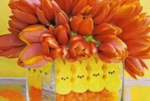 Spring Celebrations / Creative ideas for celebrating all the holidays in the springtime. / by Candice