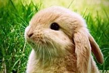 Rabbits and Hares / by Top Pinterest Animals