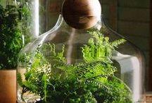 Plant Life / by Olivia Lobodin