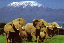 African Animals and Africa Topic / by Mishpacha Academy