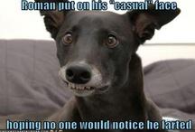 Dog & random animals! / by Dee Laskowski