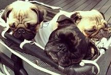 Lovely Pugs / All things pugs! / by What Follows Coffee