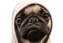 The Pug Life / by Angie Mathiesen