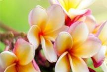 FLORAL FRAGRANCE OILS / Floral Fragrance Oils for Candles, Soap, Lotion, etc. / by Lone Star Candle Supply, Inc.