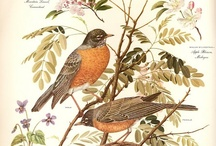 ❥ Graphics: Natural History / vintage illustrations, natural history plates, postcards, collages of birds, nests and eggs, butterflies, moths, sea creatures, etc.  / by Ana Dana