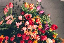 Flora & Fauna / by Osanna Boyadgian