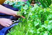 Gardening / by Sheri Phillips