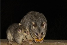 Australian wildlife / Australian animals we've encountered in our travels / by Fizzics Education