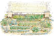 Gardening / by Trish Deutsch