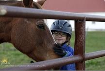 ♥ horses and riding ♥ / by Jill Samter