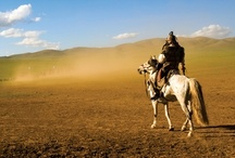 """Animal Trekking - Adventurebods / Why not join this board - just comment """"Add me"""" on any pin to be invited to it. Invite your friends/followers to join this board. If you use the board, please click on the """"Like"""" button. If you are into #adventure #travel, #outdoor pursuits, or #extreme #sports be sure to join us on Adventurebods.com or http://facebook.com/adventurebods Enjoy. / by Adventurebods.com"""