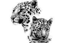Animals / by marieke heidema