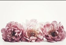 Flowers / by Isa Arzoz
