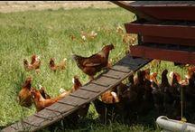 Happy Farming! / by Lassens Natural Foods & Vitamins