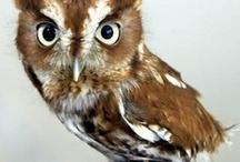 Owls. / by Serena Riley