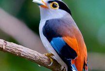 Birds / by Carmen Tardio