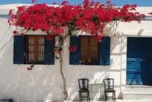 Mediterranean Inspiration / Inspiration for a mediterranean courtyard or garden / by Lisa O'Neill