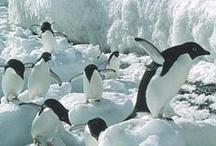 ~ Penguins ~ / by Luz Mee Padilla