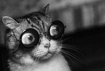 Cats / Feline varieties / by Barbara Guttman