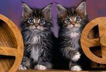 gatos / by sami ravanello