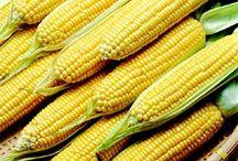 Milho, Corn,Maíz / by Gabriel Menezes Ribeiro