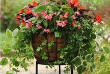 Love Gardening / by Donna Ashcraft-Mason