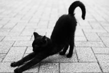 "Black cats bring luck / ""I love black cats. I have one, and his name is Oscar"" / by Elena Bota Månsson"