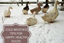 Duck Duck Goose Turkey Swan! / by Sally Sunshine