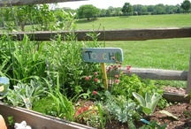 school garden ideas / by natalie creates