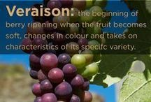 Learn About Wine / by Leoness Cellars
