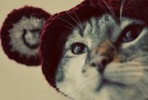 Cute Things / by Lisa Loeb