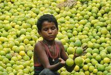 Citrus scent / Citrus things to five senses. / by Rachel Condorelli