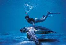 Under sea.. / by Dina Livingston