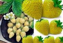 Fruits.... / by Dina Livingston