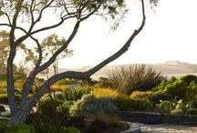 Landscape Design / by Casey Collins